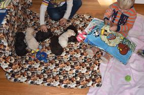 Summer's Pups 112319