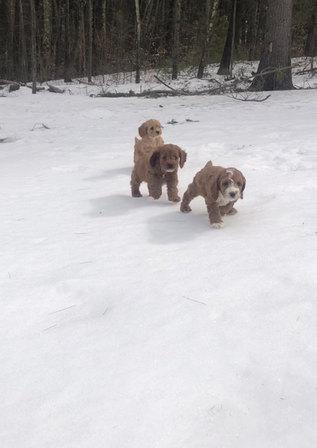 Pups at play 🐾