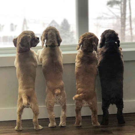 """""""When are we going out to play in that snow mom?"""" (L-R: Eevee, Noel, Madi & Summer)."""
