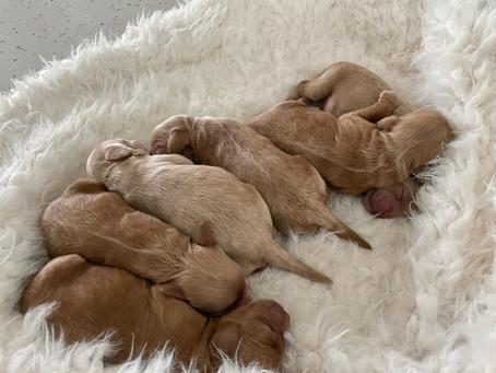 Noel's Summer Pups Have Arrived 🐾❤️