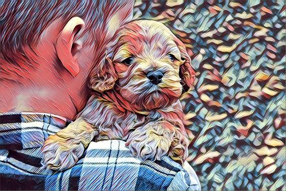 Chesley Hill Cockapoos Cockapoo Puppies NH
