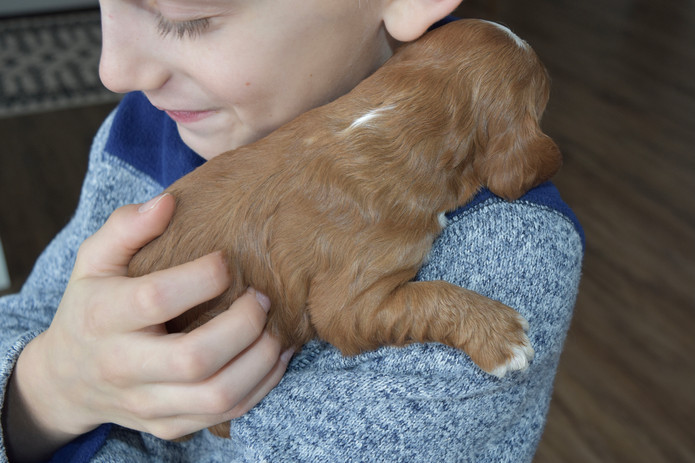 Photo shoot with Starla's litter...Devin's smile an honest expression of how he loves our pups.