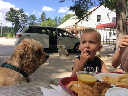 """""""Maybe if I stare at him long enough, he'll give me a bite""""."""
