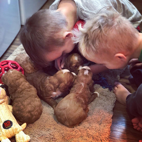 Playtime encouragement *kisses* for Starla's young pups (3 weeks).
