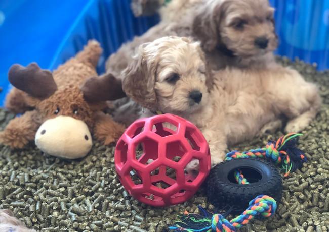 Puppy profiles ❤️