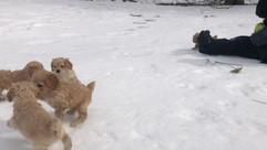 Pups at play 💙