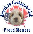American Cockapoo Club Chesley Hill Cockapoos Cockapoo Breeder NH