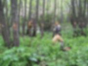 Обследование деревьев. Удаление