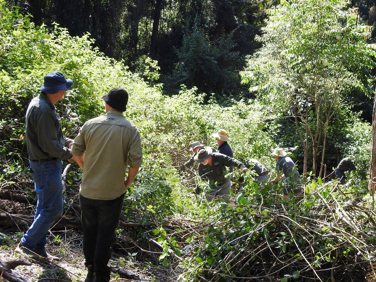 BushCare group working on clearing lantana