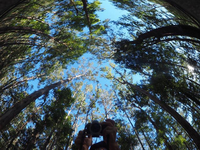 Maroochy Bushland Botanic Garden (2).jpg