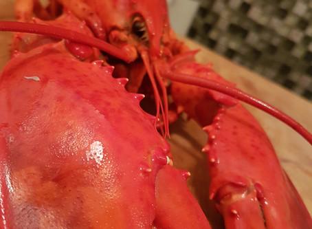 It's lobster season!