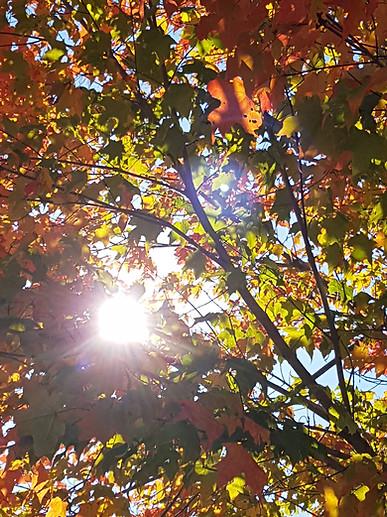Autumn in New Brunswick