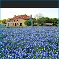 Texas Landscape.png