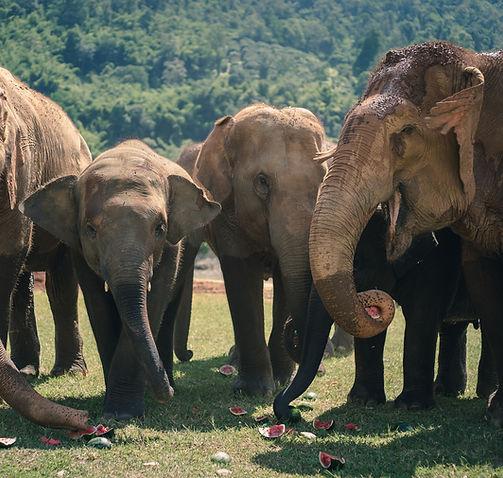 nature-elephant-forest-thailand.jpg
