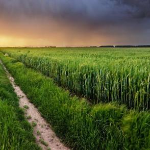 nabim Wheat Market Briefing - June 2020