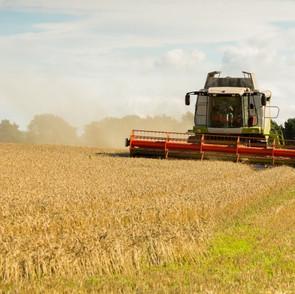 UK Milling Wheat Harvest 2020