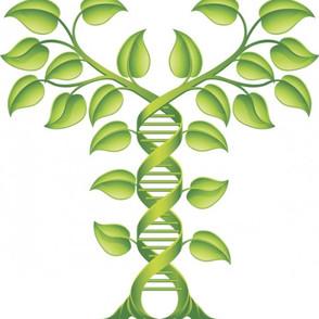 House of Lords to debate gene editing