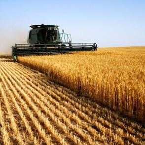 2020 UK Wheat Harvest
