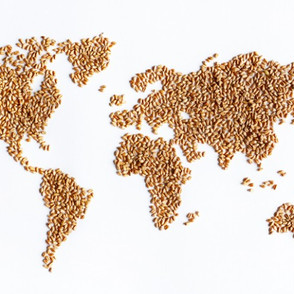 Global Grains Conference
