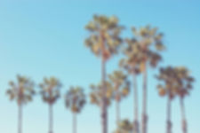 Palms2.jpg