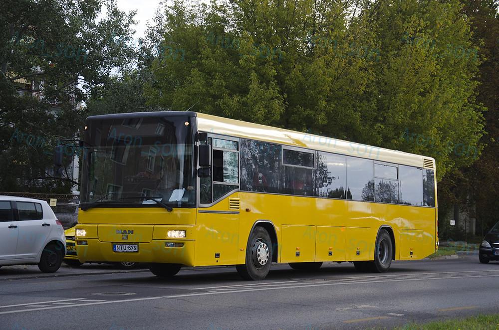 NTU-679, frissen 'sárgulva'.