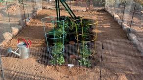 Building an In-Ground Garden Bed