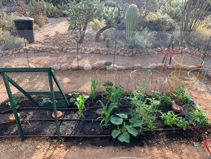 in ground garden bed under featured prod