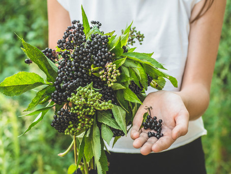 Should I Give My Child Elderberry?