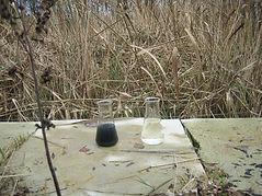 enee epuration wetlands eaux usees traitement treatment