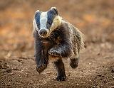 Ginger Wildlife Photography.jpg