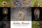 Ashley Vincent Photography.jpg