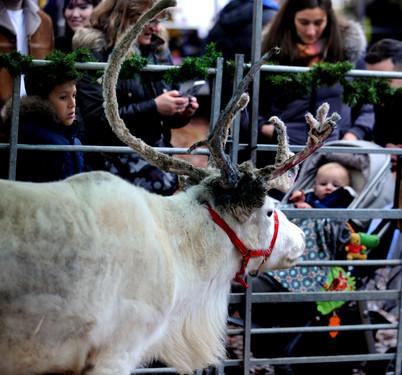 fayre 019 reindeer (1).JPG