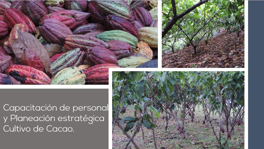 Casos de Éxito Cacao Productividad Sanidad