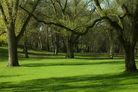 阳光下的树林.jpg