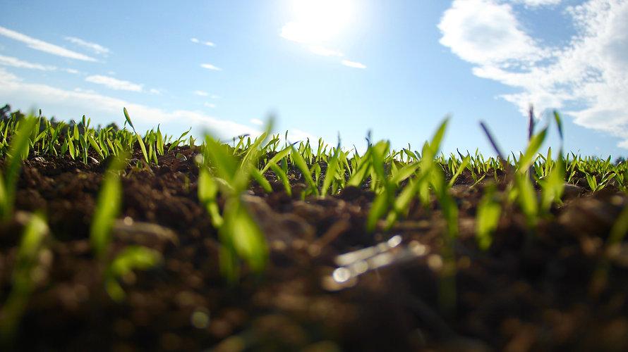grass-1148913.jpg
