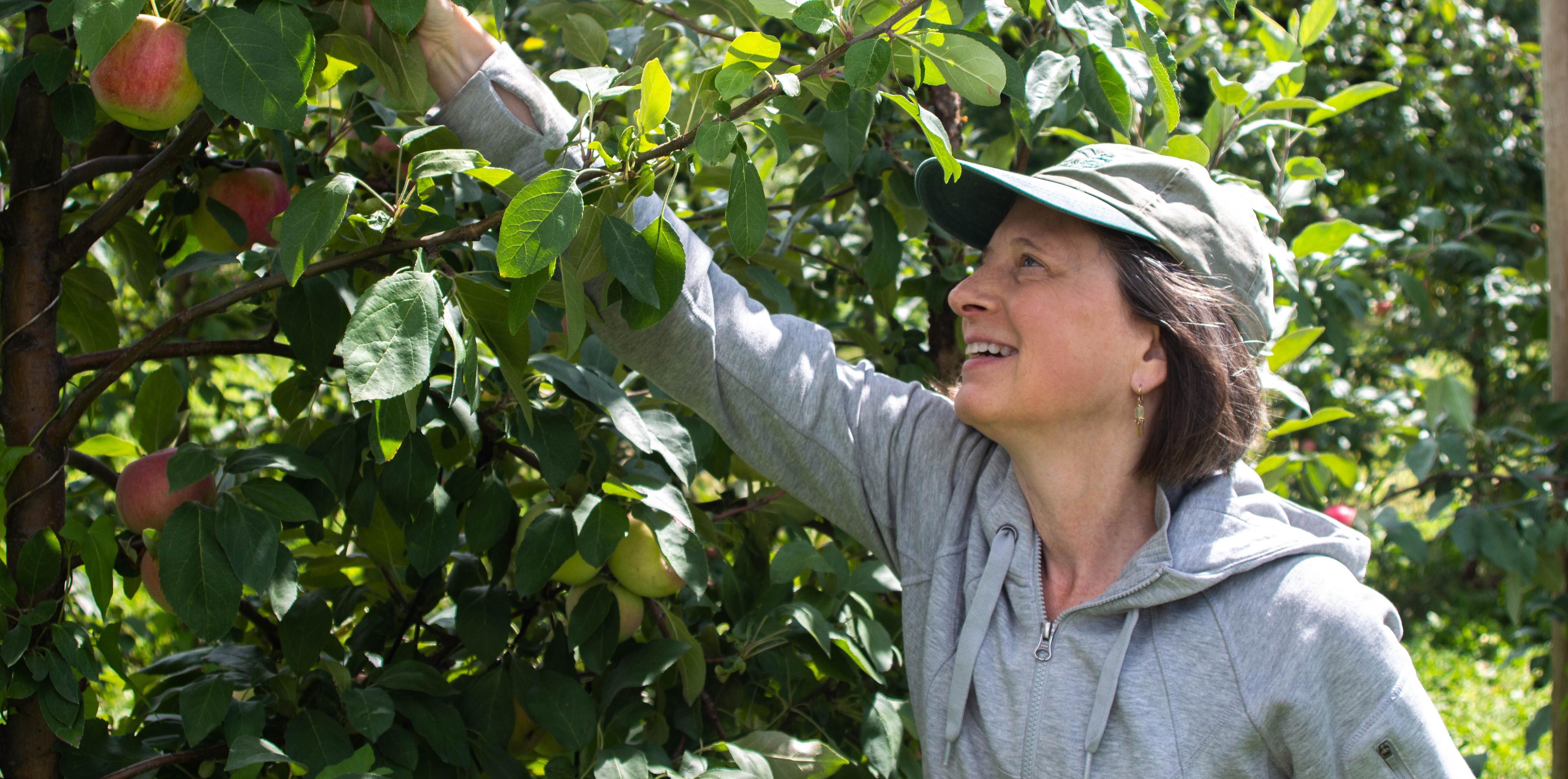 Kate picks a zestar recrop