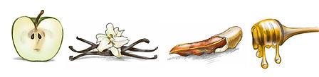 Pommore spot drawings.jpg