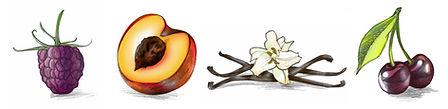 Cherry harvest spot drawings.jpg