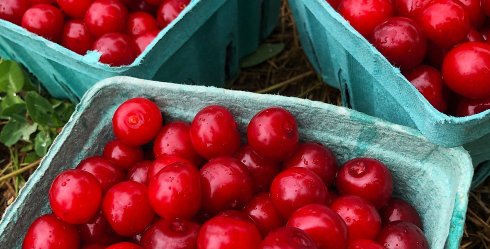 Sour Cherries for in-store pickup, per quart