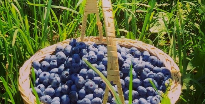 Fresh Blueberries pre-order for store pickup per quart