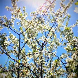 bloom%20and%20sun_edited.jpg