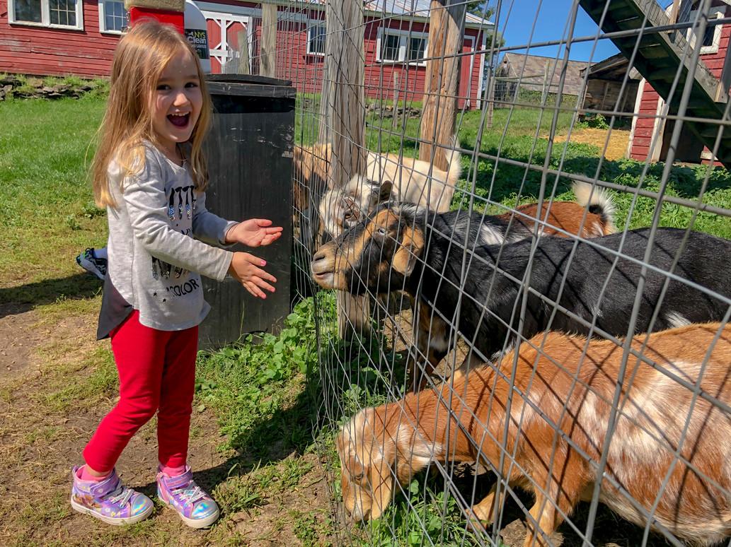 September goat feeding 2021.jpg