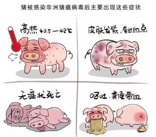 中國現下的非洲豬瘟防疫與宣傳