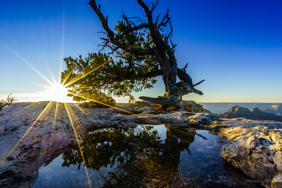 Sunrise Tree Magic
