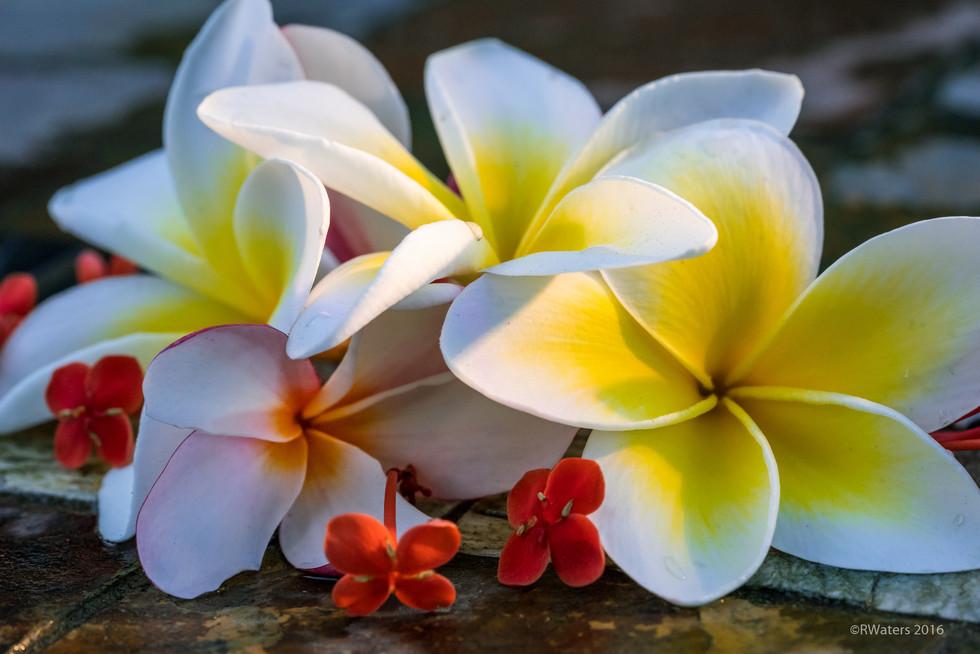 Hawaii-118