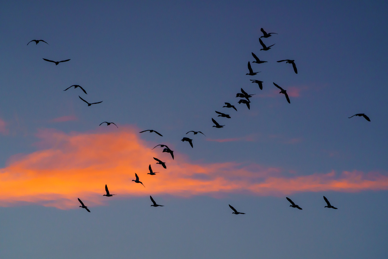 Bird Choreography