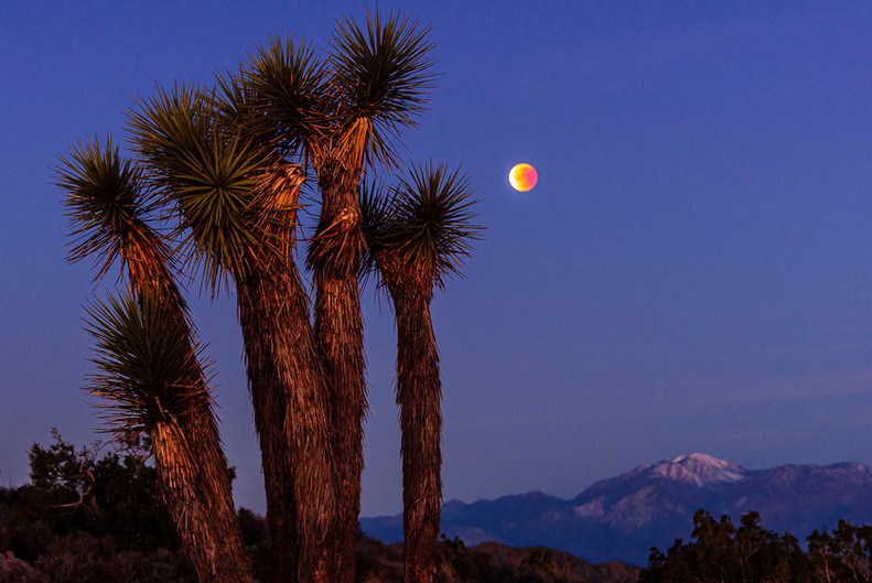 A Lunar Eclipse in Joshua Tree