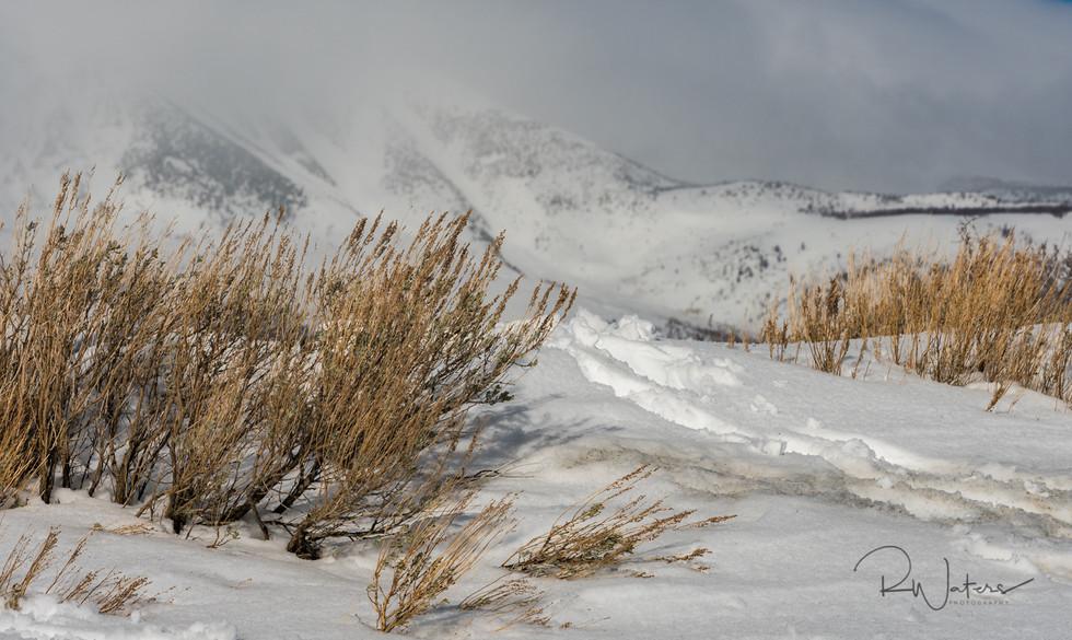 Sierra Winter Landscape