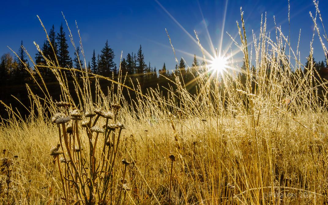 Sunburst Fields