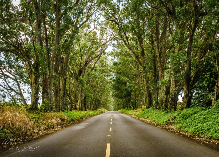 Hawaii-114